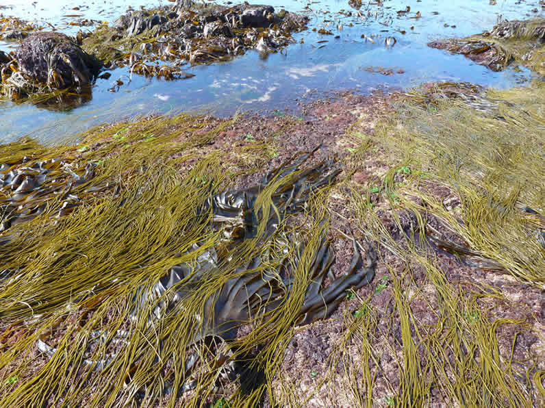 Seaweed course Inishmore