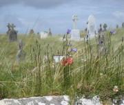 verschiedene Pflanzenarten wachsen auf der Insel