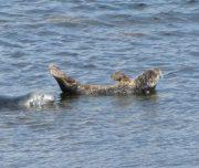Inishmore, Aran Islands, Dun Seehunde, Inselreise