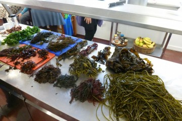 Seaweed Week - Celtic Spirit