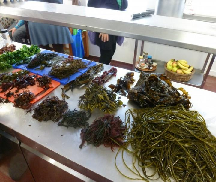 Seaweed Week - Celtic Spirit